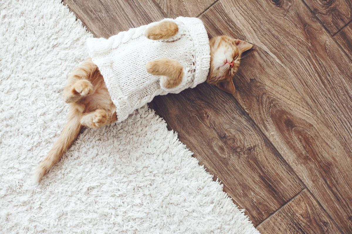 cat being cozy