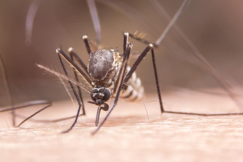 mosquito on skin